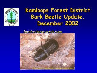 Kamloops Forest District  Bark Beetle Update,  December 2002