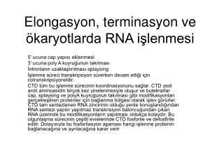 Elongasyon, terminasyon ve ökaryotlarda RNA işlenmesi
