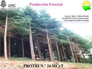 Producción Forestal