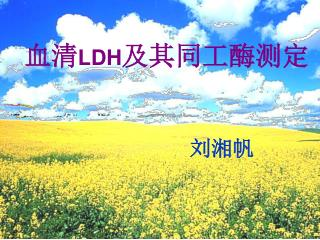 血清 LDH 及其同工酶测定