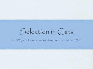 Selection in Cats