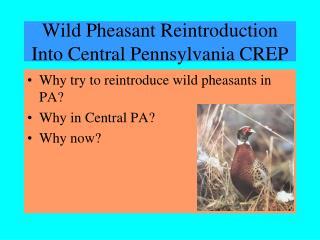 Wild Pheasant Reintroduction Into Central Pennsylvania CREP