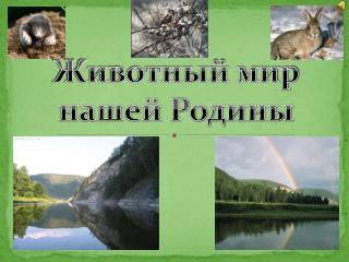 Животный мир  нашей Родины