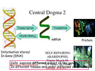 Central Dogma 2