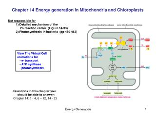 Chapter 14 Energy generation in Mitochondria and Chloroplasts