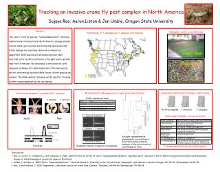 Tracking an invasive crane fly pest complex in North America