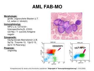 Morphologie: große, ungranulierte Blasten (z.T. L2, selten L1 ähnlich)
