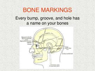 BONE MARKINGS