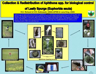 Collection & Redistribution of Aphthona spp. for biological control