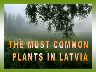 THE MOST COMMON  PLANTS IN LATVIA
