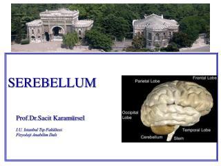 SEREBELLUM   Prof.Dr.Sacit Karam rsel  I.U. Istanbul Tip Fak ltesi Fizyoloji Anabilim Dali