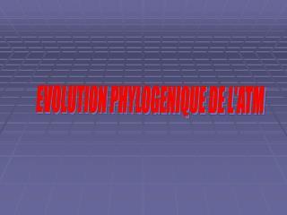 EVOLUTION PHYLOGENIQUE DE L'ATM