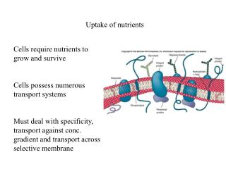 Uptake of nutrients
