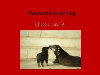 Dawa the stray dog