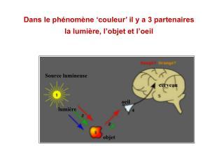 Dans le ph nom ne  couleur  il y a 3 partenaires la lumi re, l objet et l oeil