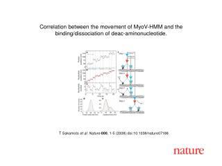 T Sakamoto  et al. Nature 000 , 1-5 (2008) doi:10.1038/nature071 88