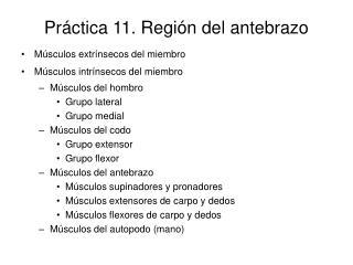 Práctica 11. Región del antebrazo