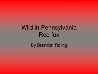 Wild in Pennsylvania Red fox
