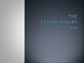 THE GENITOURINARY SYSTEM