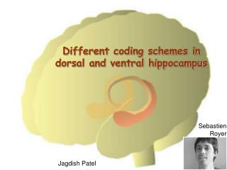 Different coding schemes in dorsal and ventral hippocampus