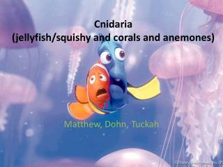 Cnidaria (jellyfish/squishy and corals and anemones)