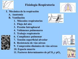 Fisiología Respiratoria I.  Mecánica de la respiración     A.  Anatomía     B.  Ventilación