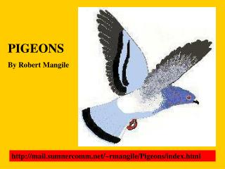 PIGEONS By Robert Mangile