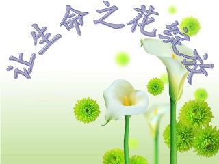让生命之花绽放