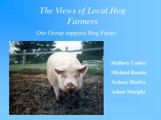 The Views of Local Hog Farmers