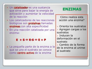 ENZIMAS