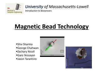Magnetic Bead Technology