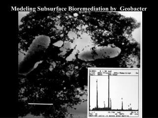 Modeling Subsurface Bioremediation by  Geobacter