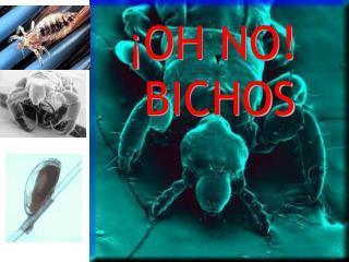 � OH NO!  BICHOS