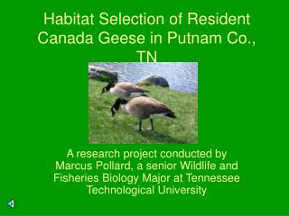 Habitat Selection of Resident Canada Geese in Putnam Co., TN