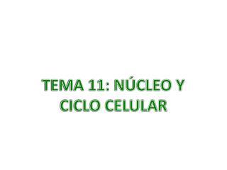 TEMA 11: NÚCLEO Y CICLO CELULAR