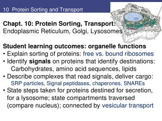 10  Protein Sorting and Transport