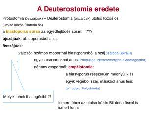 A Deuterostomia eredete