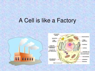 A Cell is like a Factory