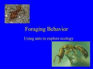 Foraging Behavior