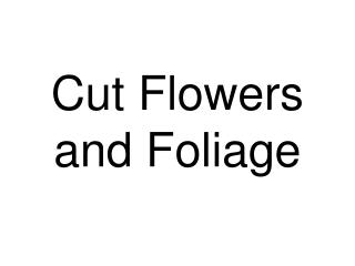 Cut Flowers and Foliage