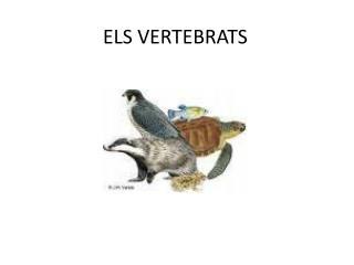 ELS VERTEBRATS