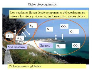 Ciclos biogeoqu�micos