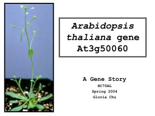 Arabidopsis thaliana  gene At3g50060