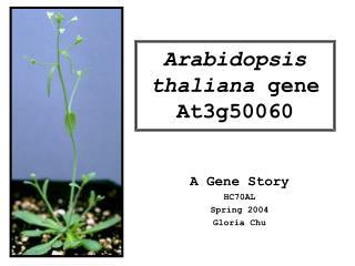 Arabidopsis thaliana  gene At3g50060