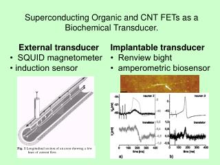 Superconducting  Organic and CNT FETs as a  Biochemical  Transducer.