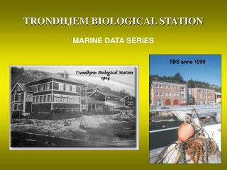 TRONDHJEM BIOLOGICAL STATION MARINE DATA SERIES