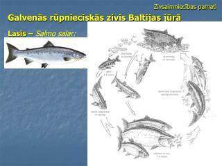 Zivsaimniecības pamati