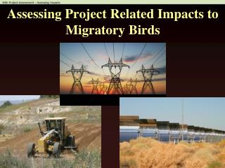 Assessing Project Related Impacts to Migratory Birds