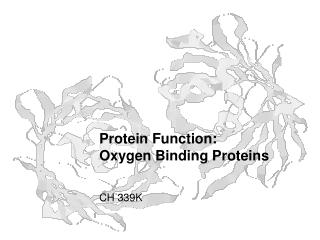 Protein Function: Oxygen Binding Proteins