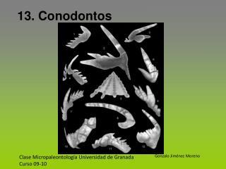 Clase Micropaleontología Universidad de Granada Curso 09-10